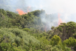 fire assisi bushes 001