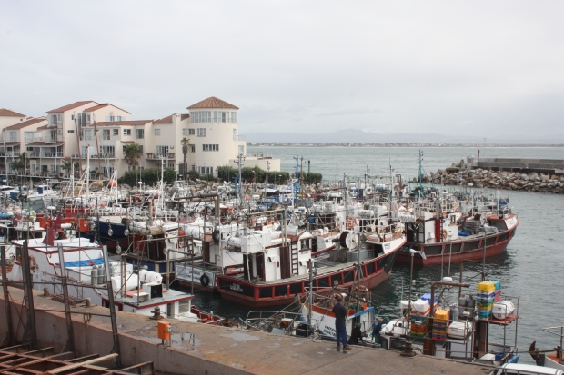 Fishing boats lying idle at the harbour in St Francis bay and cannot go out at the moment as there are no squid to catch.