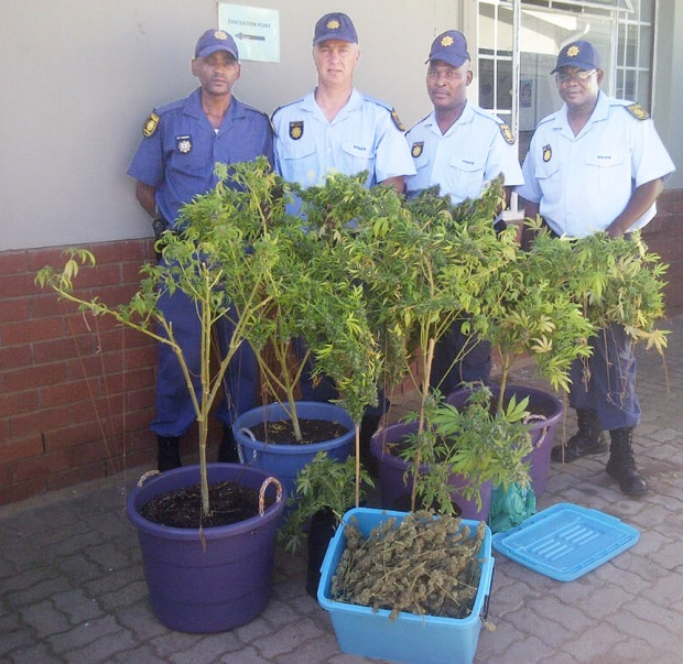 Jeffresy Bay SAP members with some of the dagga plants. Photo: SAP (edited)