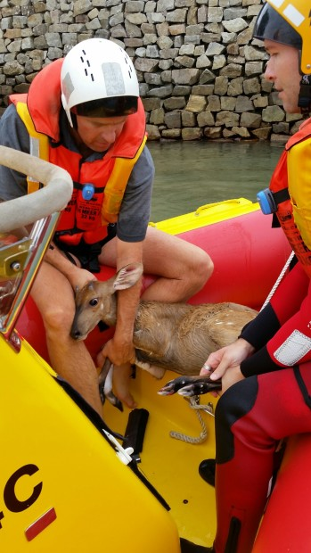 bushbuck rescued1