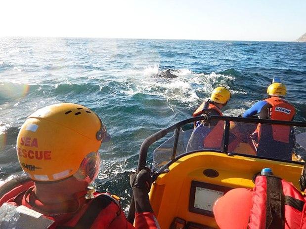 whale rescue 3
